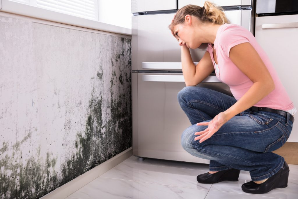 black mold removal Ventura County
